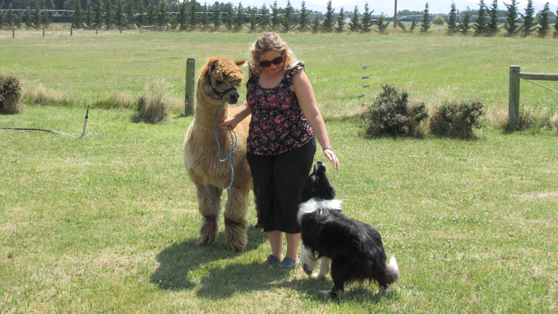 Animal Interaction - Eyreview Retreat